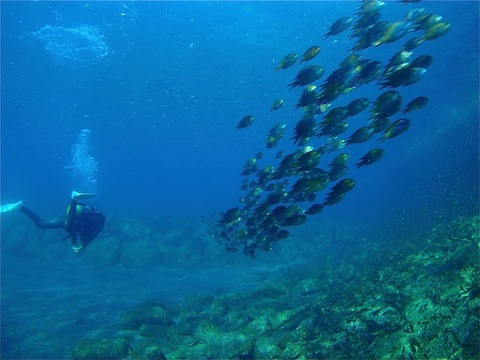 mo-diver1.jpg